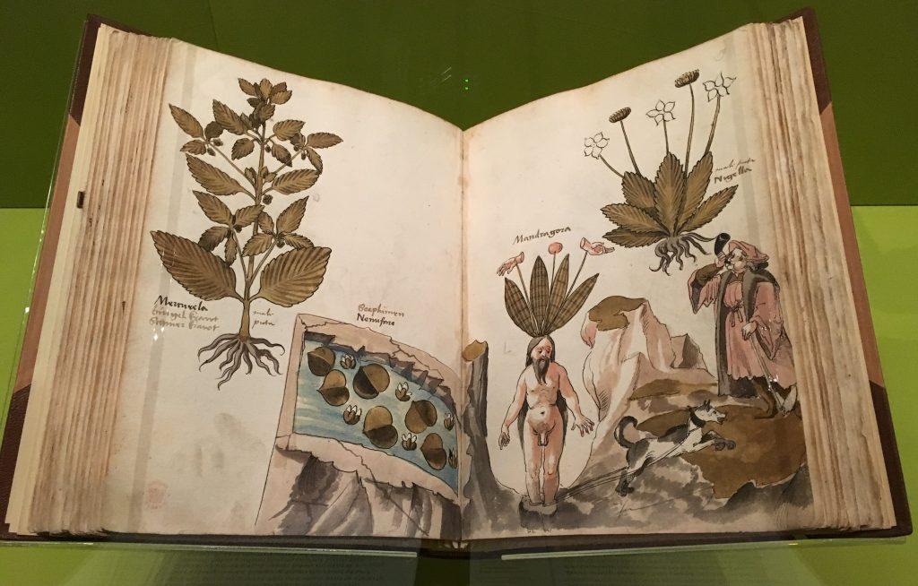 Mandrake Giovanni Cadamosto